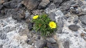 Las flores en piedra.