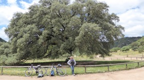 2 kilometer (round trip) detour to see large oak tree.